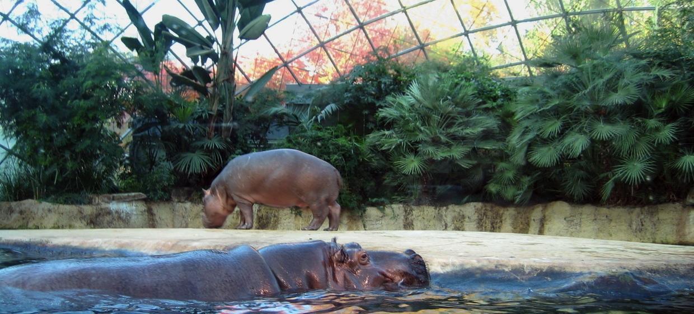 Zoologischer Garten Berlin 1
