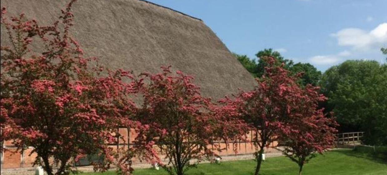Schloss Blumendorf 12