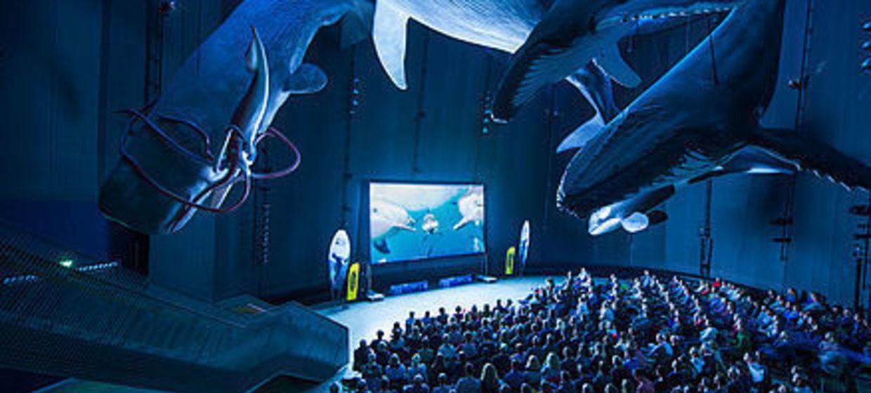 Ozeaneum - Riesen der Meere 2