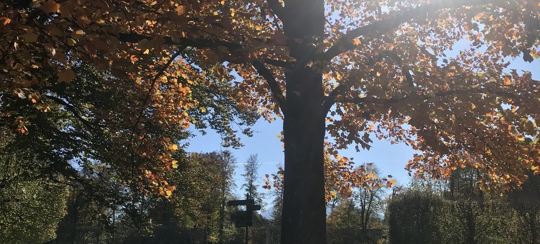 Parkcafé Schloss Hellbrunn 7